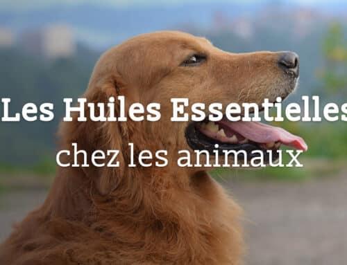 Utilisation des huiles essentielles chez nos amis les bêtes : leurs usages, leurs toxicités et leurs limites.