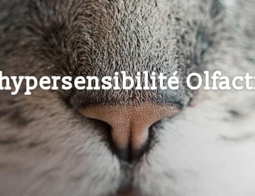 L'hypersensibilité Olfactive chez les animaux